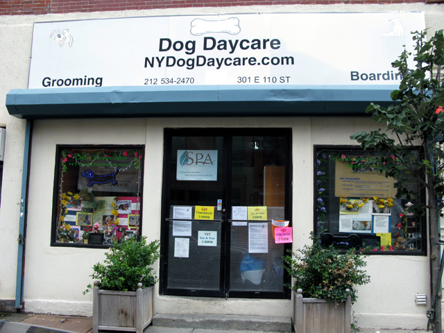 Photo of the front of the New York Dog Daycare storefront